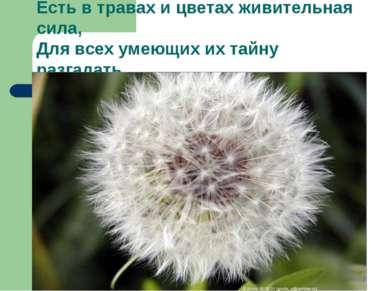 Есть в травах и цветах живительная сила, Для всех умеющих их тайну разгадать