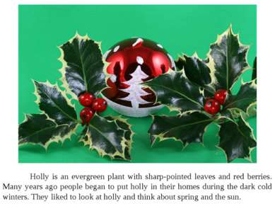 Holly is an evergreen plant with sharp-pointed leaves and red berries. Many y...