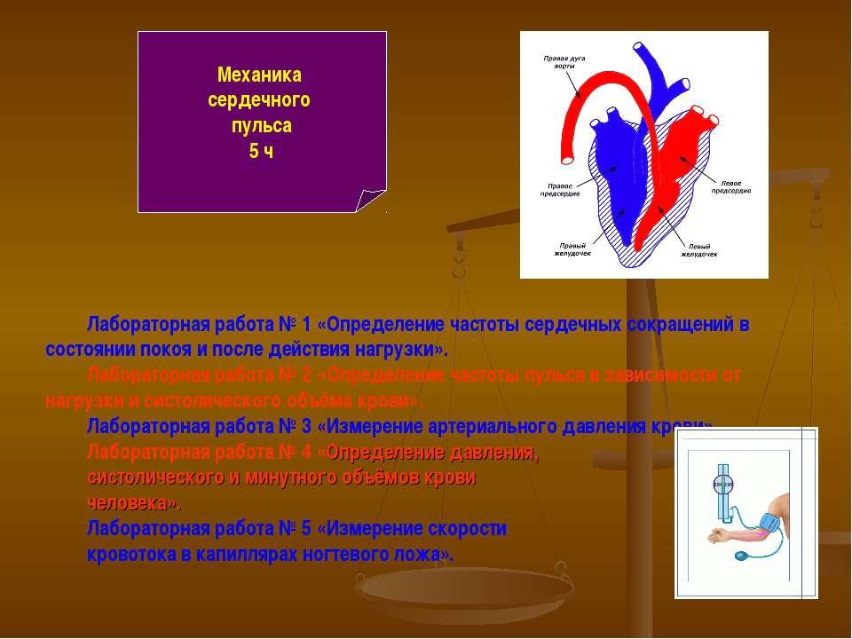 Механика сердечного пульса 5 ч Лабораторная работа № 1 «Определение частоты с...