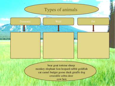 Domestic Wild Pet Types of animals bear goat tortoise sheep monkey elephant l...