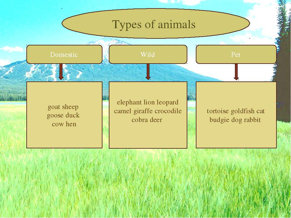 Domestic Wild Pet goat sheep goose duck cow hen elephant lion leopard camel g...