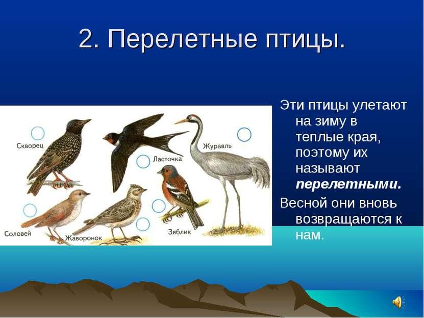 2. Перелетные птицы. Эти птицы улетают на зиму в теплые края, поэтому их назы...