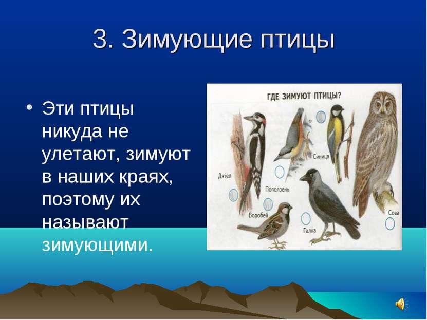 3. Зимующие птицы Эти птицы никуда не улетают, зимуют в наших краях, поэтому ...