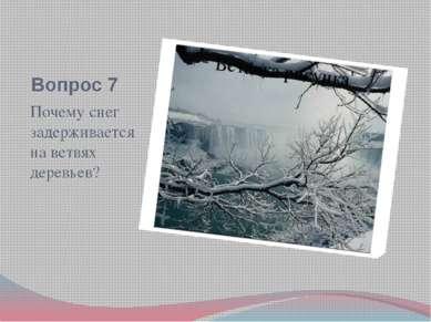 Вопрос 7 Почему снег задерживается на ветвях деревьев?