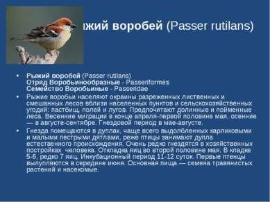 Рыжий воробей (Passer rutilans) Рыжий воробей (Passer rutilans) Отряд Воробьи...
