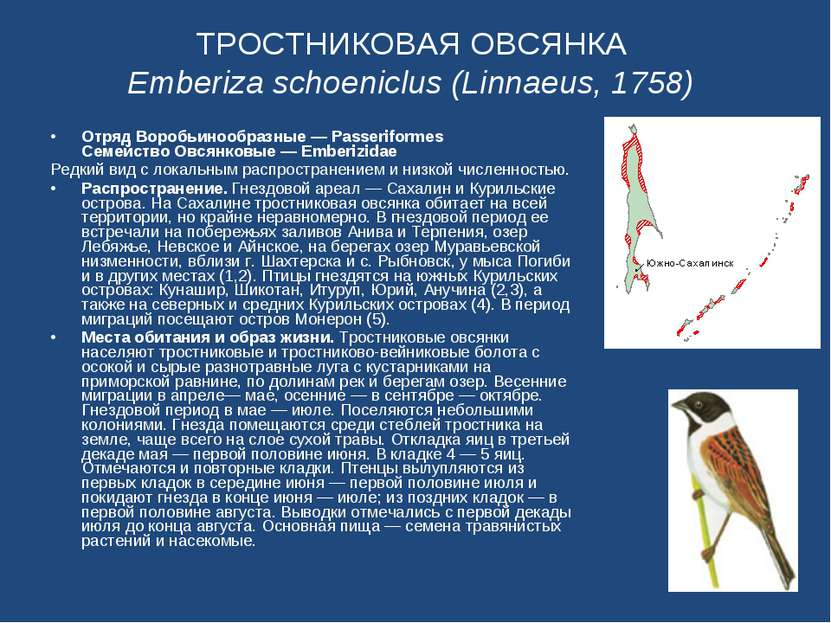 ТРОСТНИКОВАЯ ОВСЯНКА Emberiza schoeniclus (Linnaeus, 1758) Отряд Воробьинообр...