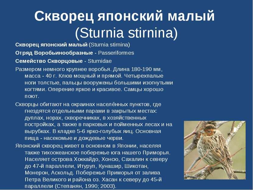 Скворец японский малый (Sturnia stirnina) Скворец японский малый (Sturnia sti...