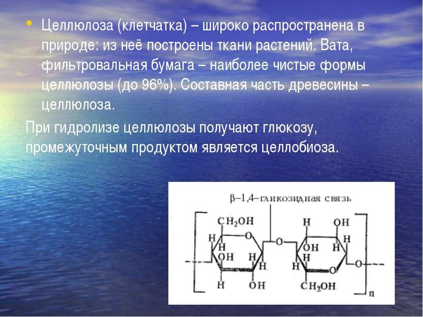 Целлюлоза (клетчатка) – широко распространена в природе: из неё построены тка...