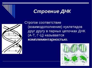 Строение ДНК Строгое соответствие (взаимодополнение) нуклетидов друг другу в ...