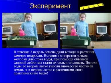 Эксперимент В течение 3 недель семена дали всходы и растения заметно подросли...
