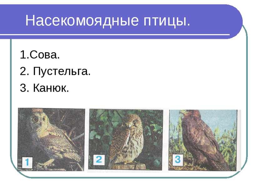 Насекомоядные птицы. 1.Сова. 2. Пустельга. 3. Канюк.
