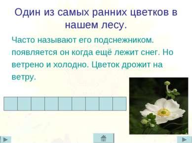 Один из самых ранних цветков в нашем лесу. Часто называют его подснежником. п...