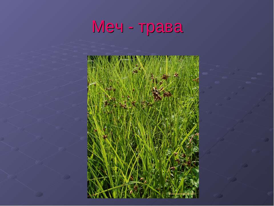 Меч - трава