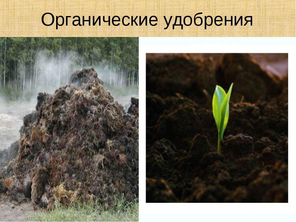 Картинки по запросу органические удобрения