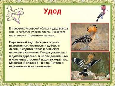 Удод В пределах Кировской области удод всегда был и остается редким видом. Гн...