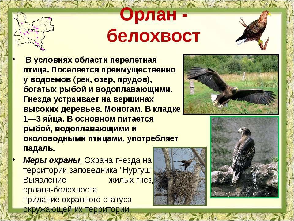 Орлан - белохвост В условиях области перелетная птица. Поселяется преимуществ...