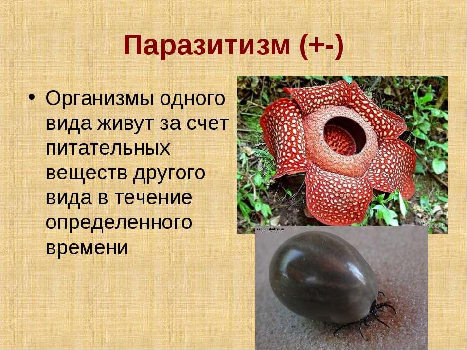 Паразитизм (+-) Организмы одного вида живут за счет питательных веществ друго...