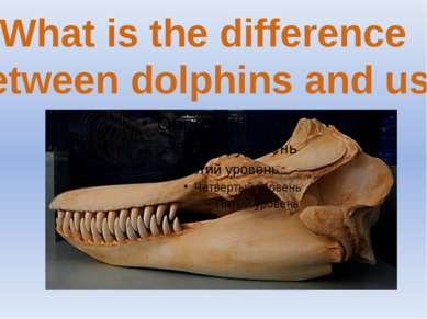 What is the difference between dolphins and us?