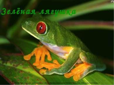 Зелёная лягушка Лазарева Лидия Андреевна, учитель начальных классов, Рижская ...