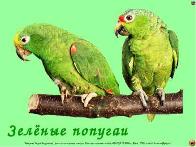 Зелёные попугаи Лазарева Лидия Андреевна, учитель начальных классов, Рижская ...