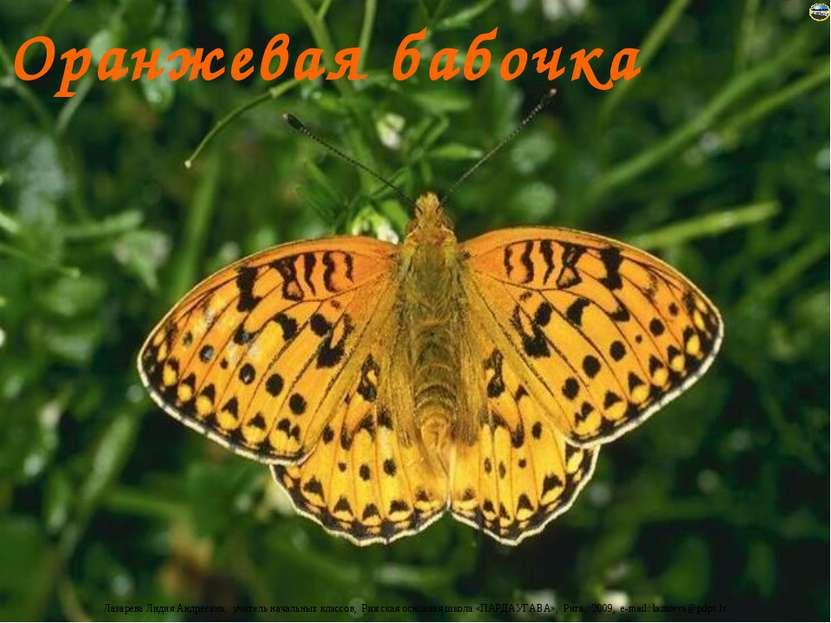 Оранжевая бабочка Лазарева Лидия Андреевна, учитель начальных классов, Рижска...
