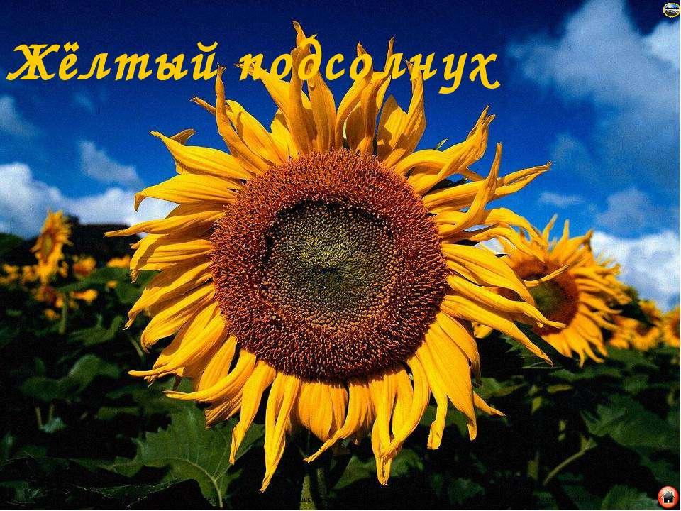 Жёлтый подсолнух Лазарева Лидия Андреевна, учитель начальных классов, Рижская...