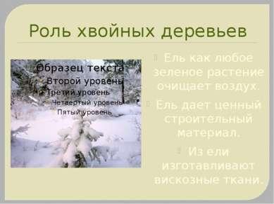 Роль хвойных деревьев Ель как любое зеленое растение очищает воздух. Ель дает...