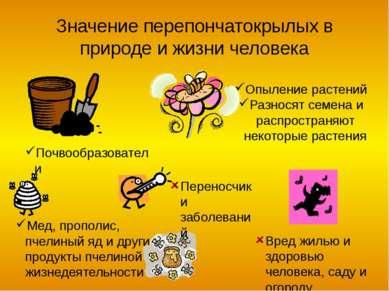 Угадай кто Наездник Шмель Пилильщик Оса Пчела (трутень)