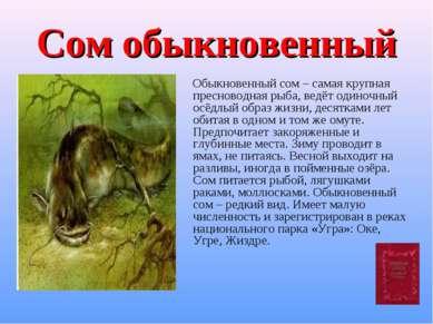 Сом обыкновенный Обыкновенный сом – самая крупная пресноводная рыба, ведёт од...