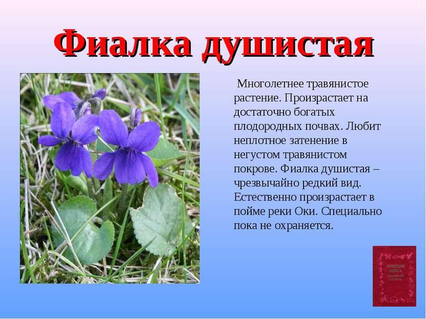 Фиалка душистая Многолетнее травянистое растение. Произрастает на достаточно ...