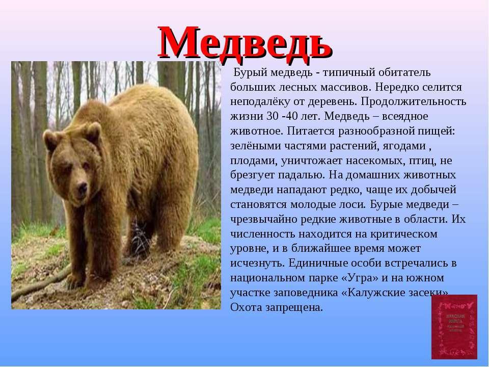 Медведь Бурый медведь - типичный обитатель больших лесных массивов. Нередко с...