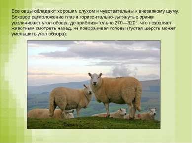 Все овцы обладают хорошим слухом и чувствительны к внезапному шуму. Боковое р...