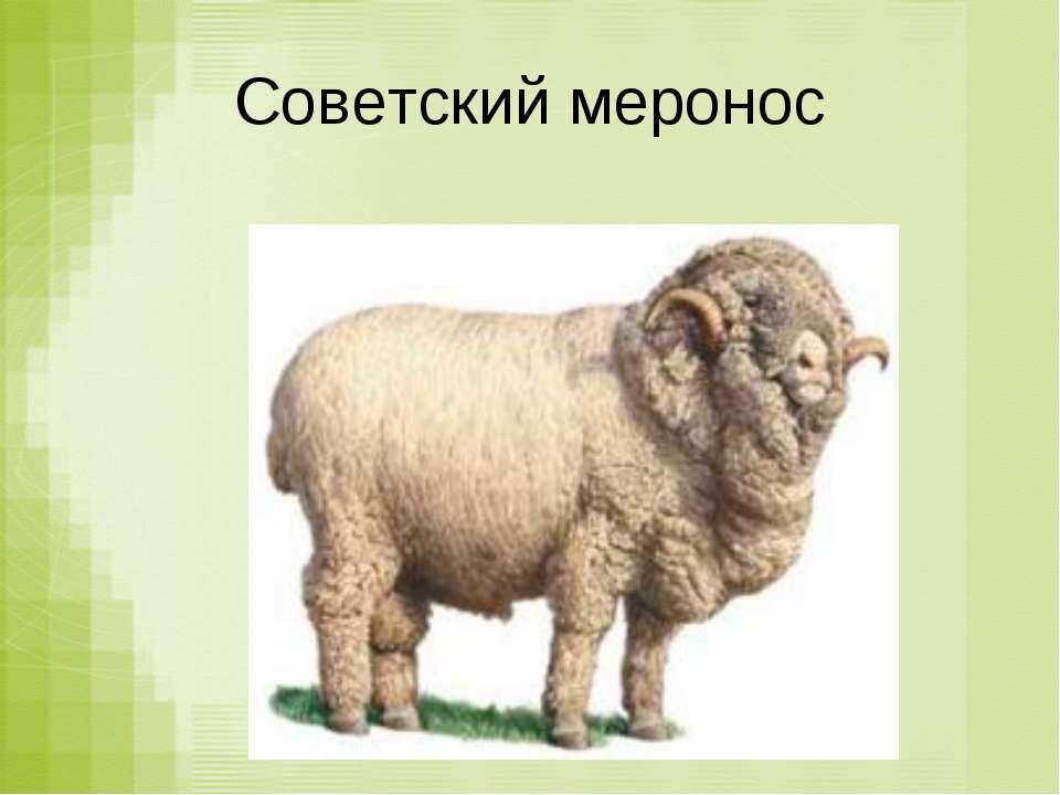 Советский меронос