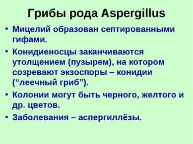 Грибы рода Aspergillus Мицелий образован септированными гифами. Конидиеносцы ...