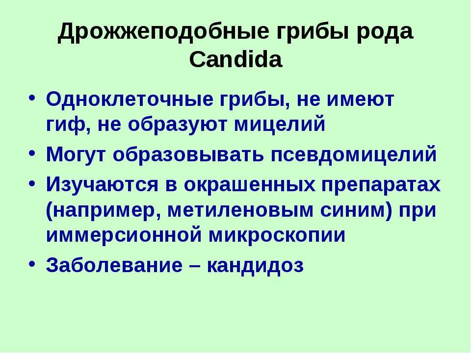 Дрожжеподобные грибы рода Candida Одноклеточные грибы, не имеют гиф, не образ...