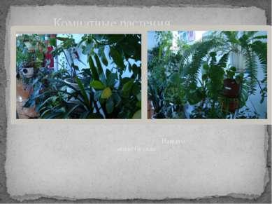 Нашего зимнего сада Комнатные растения