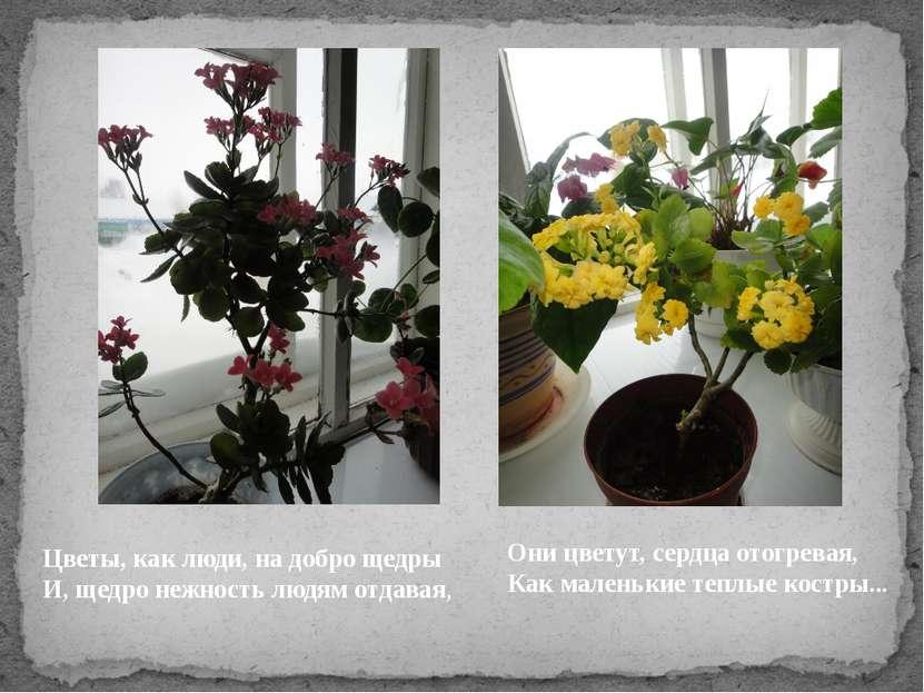 Цветы, как люди, на добро щедры И, щедро нежность людям отдавая, Они цветут, ...