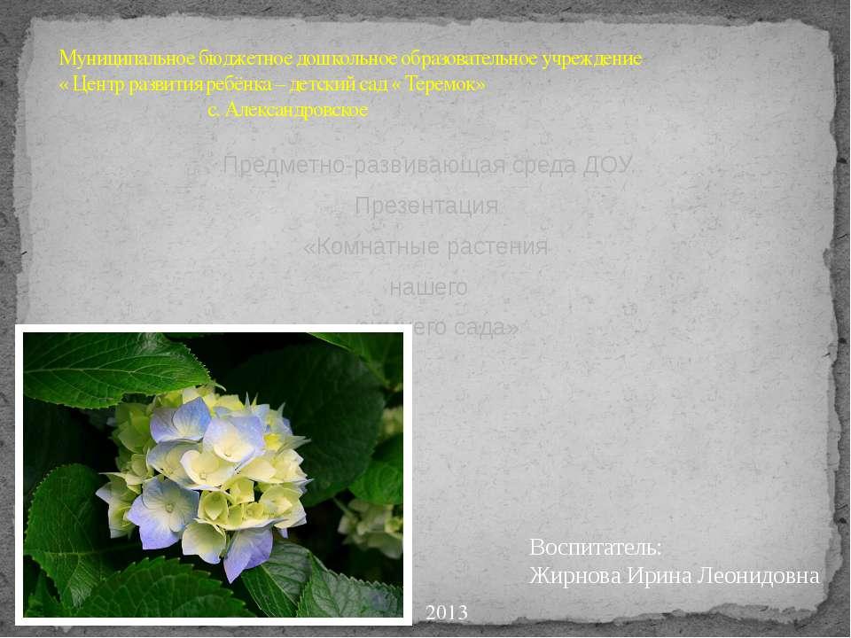 Предметно-развивающая среда ДОУ. Презентация «Комнатные растения нашего зимне...