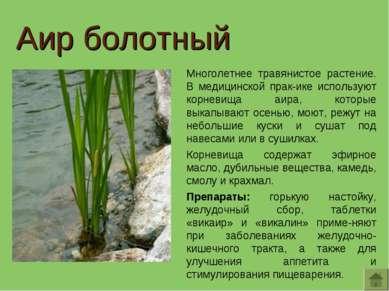 Аир болотный Многолетнее травянистое растение. В медицинской прак-ике использ...