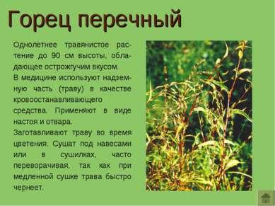 Однолетнее травянистое рас-тение до 90 см высоты, обла-дающее острожгучим вку...