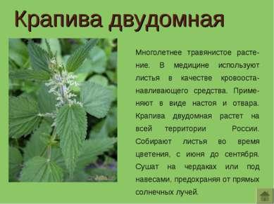 Крапива двудомная Многолетнее травянистое расте-ние. В медицине используют ли...