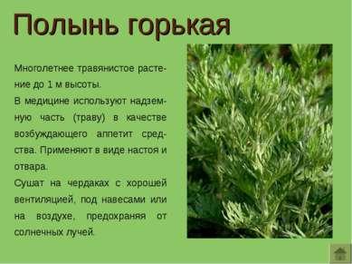 Многолетнее травянистое расте-ние до 1 м высоты. В медицине используют надзем...