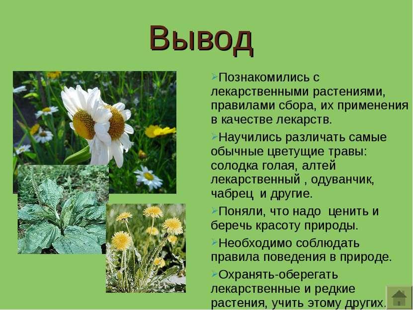 Познакомились с лекарственными растениями, правилами сбора, их применения в к...