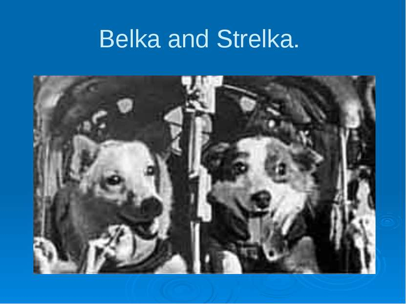Belka and Strelka.