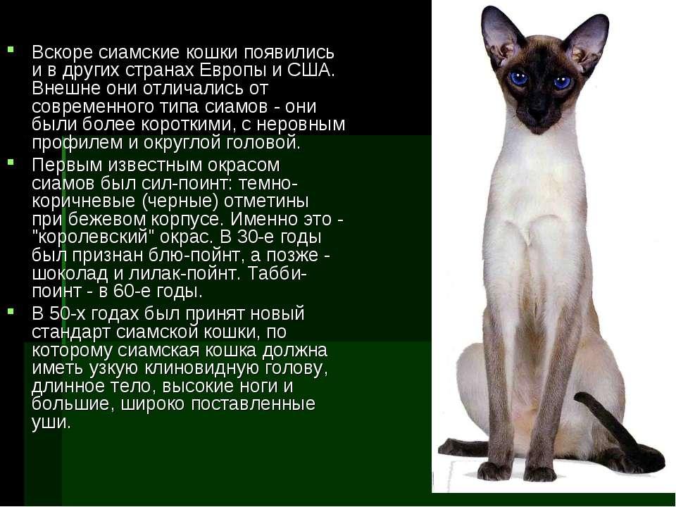 Вскоре сиамские кошки появились и в других странах Европы и США. Внешне они о...