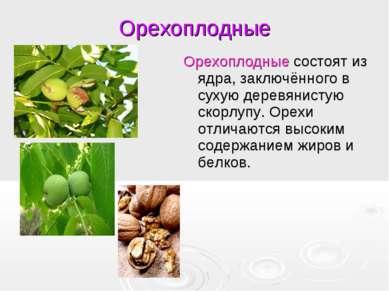 Орехоплодные Орехоплодные состоят из ядра, заключённого в сухую деревянистую ...