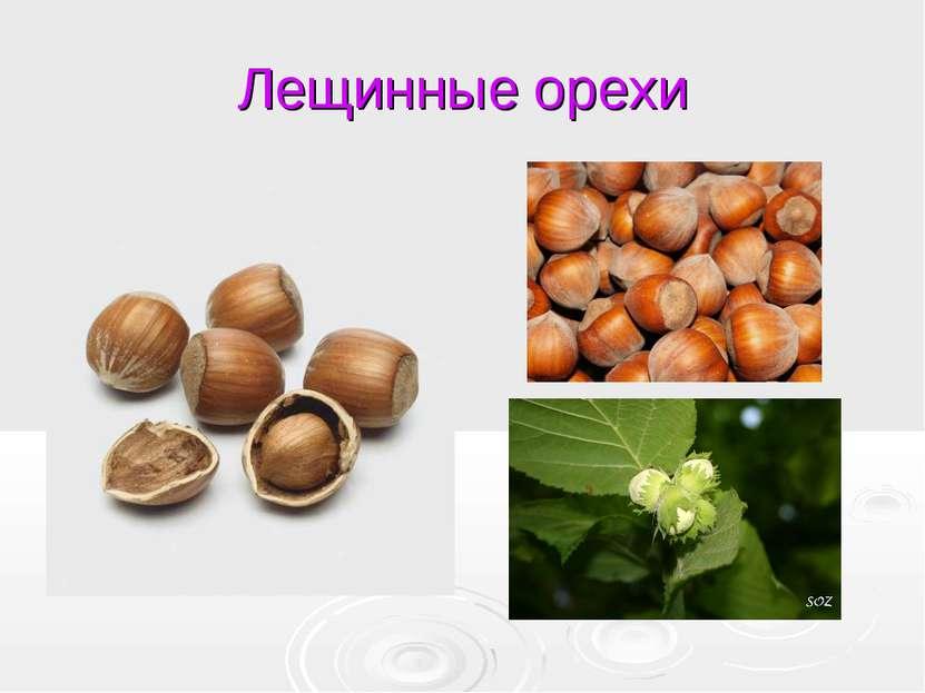 Лещинные орехи