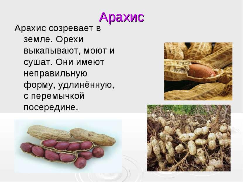Арахис Арахис созревает в земле. Орехи выкапывают, моют и сушат. Они имеют не...