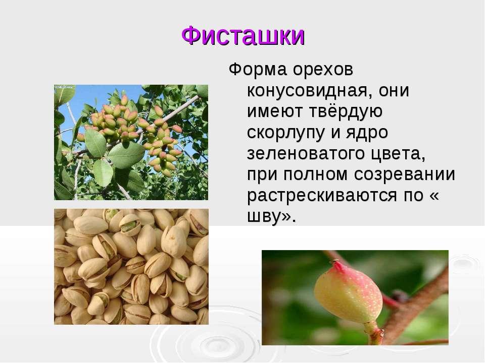 Фисташки Форма орехов конусовидная, они имеют твёрдую скорлупу и ядро зеленов...