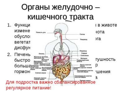 Органы желудочно – кишечного тракта Функциональные изменения органов ЖКТ, обу...
